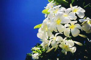 Nevis Botanical Gardens