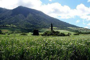 St. Kitts Sugar Cane Fields www.njcharters.com