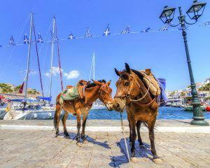 bigstock-Donkeys-On-Greek-Island-42787099