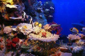 Fiji Underwater Scene www.njcharters.com