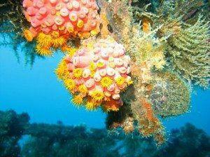 Underwater Coral Asia www.njcharters.com